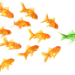 Follow-the-leader-fish