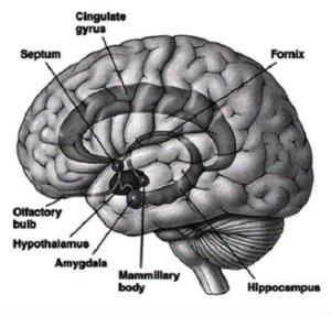 cervelloemozioni
