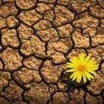 resilienza-2-300x185