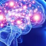 memoria cervello