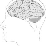 cervello test intelligenza