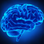 cervello-umano