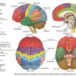 cervello antisociale