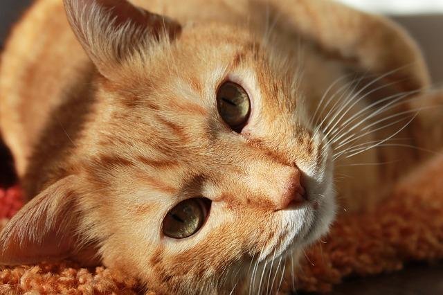 cat-stress-misurazione-coping-test