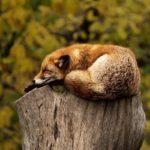 fox-ridurre-lo-stress