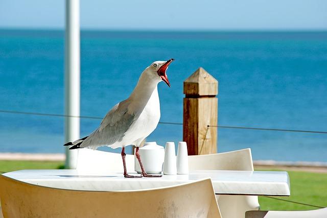 seagull-1209875_640
